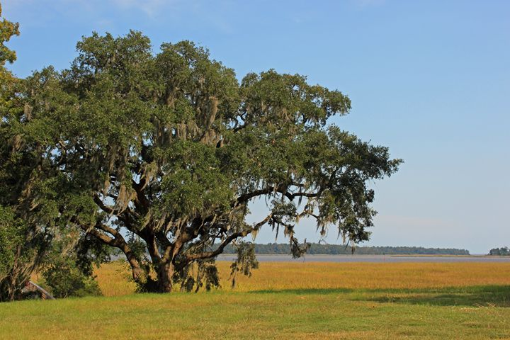 Low Country - Images by Suzanne Gaff