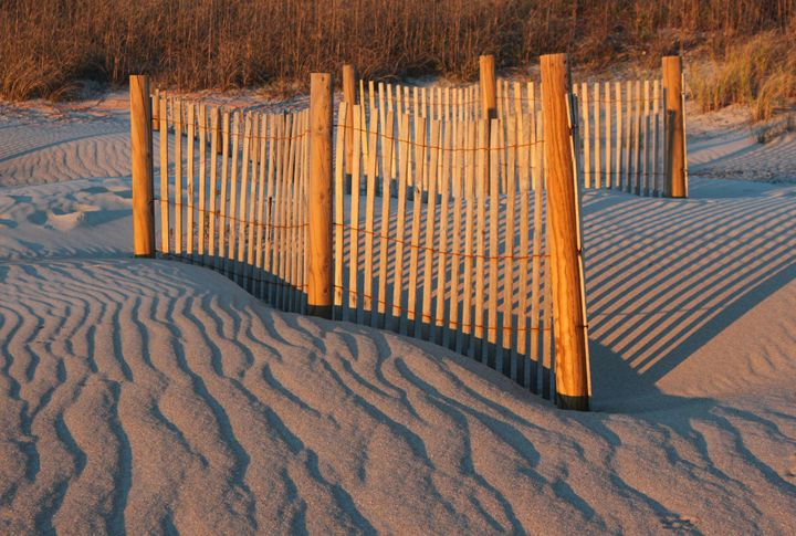 Dune Fences - Images by Suzanne Gaff