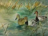 3 Ducks in pond