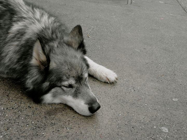Husky - Lepton