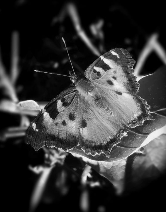 """Butterfly Left"" - The Photography of Michael C Bertsch"