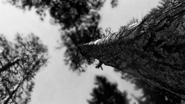 """""""Looking up"""" - The Photography of Michael C Bertsch"""