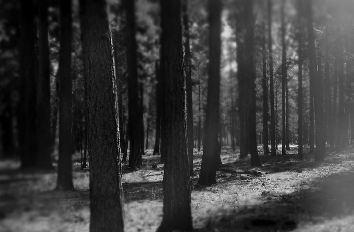 """A Forest"" - The Photography of Michael C Bertsch"