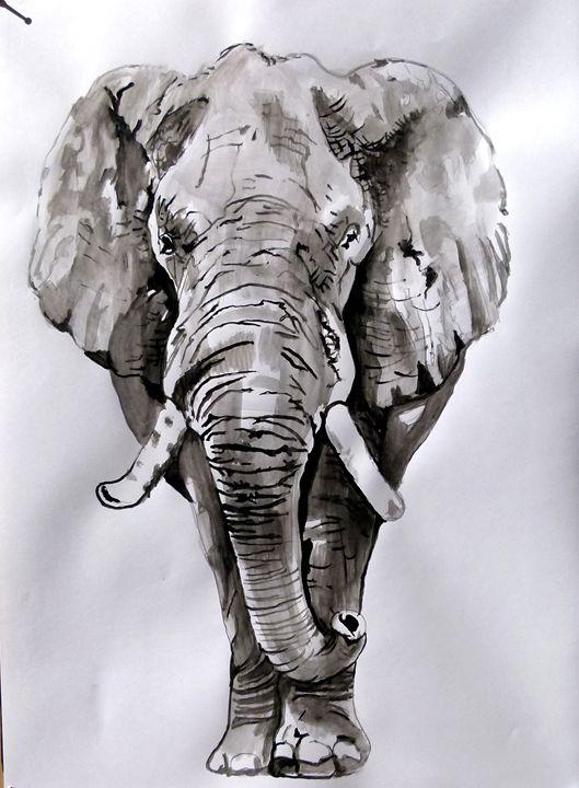 Elephant - Soso kumsiashvili
