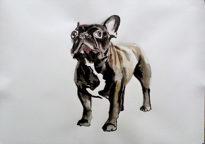 french bulldog - Soso kumsiashvili