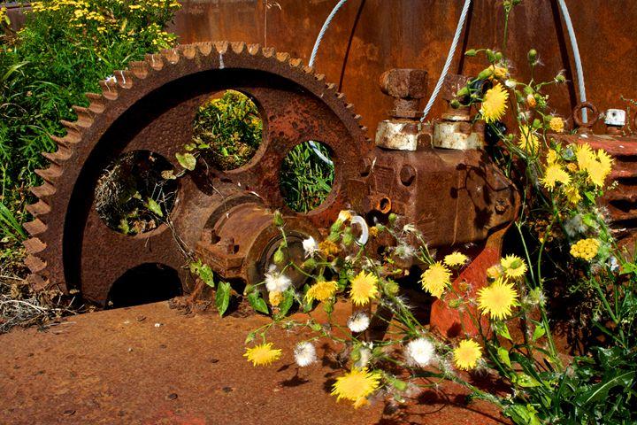 Rusty Gears and Wildflowers - Olophoto.Me