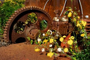Rusty Gears and Wildflowers