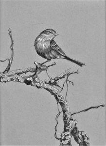 Perching Warbler