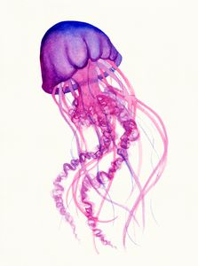 Jellyfish in Pink and Purple