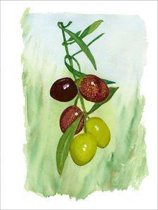 Mediterranean Olives On The Vine