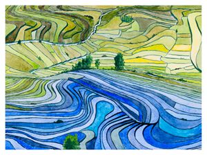 Rice Paddy Fields