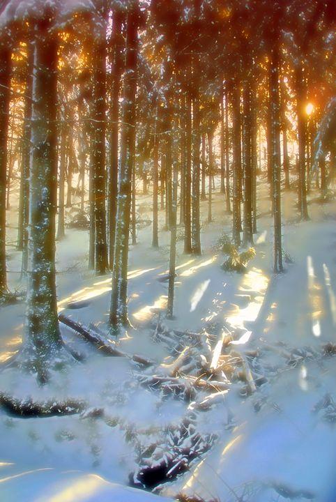 A wintery landscape - Rod Jones Photography