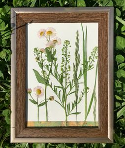 Wildflowers: Alabama - Nature Up Design