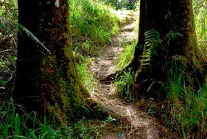 inland pathway