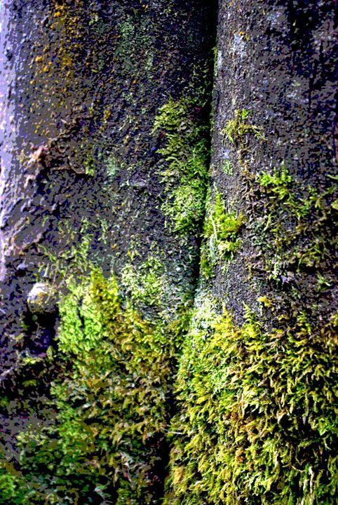 tree moss - D.M MCDONALD