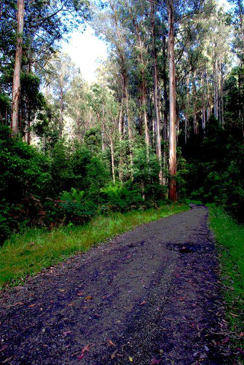 bush track - D.M MCDONALD