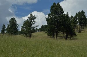 Pajarito mountain, New Mexico, US - Jerome Blanchard's artworks