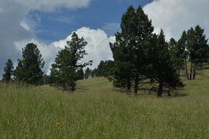 Pajarito mountain, New Mexico, US - Jerome Blanchard's artworks