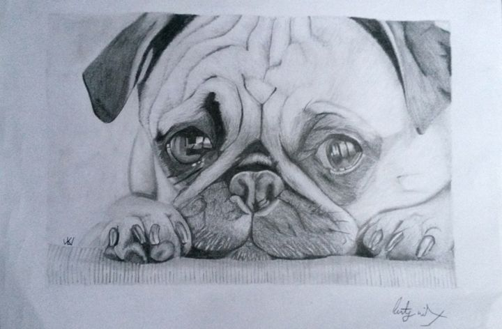 Pug puppy - Art by Kirsty Willcox