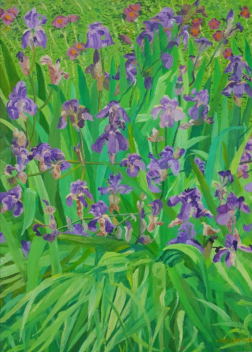 Irises from Kono - Tomislav Ivanišin