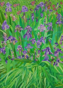Irises from Kono