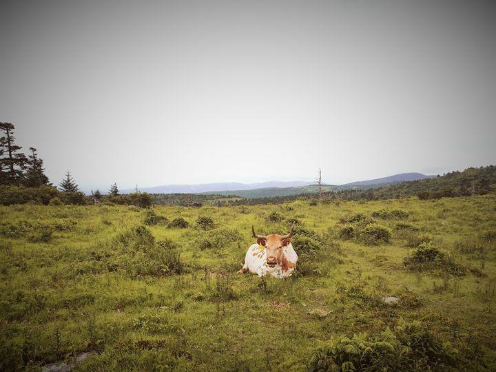Bull on the Hills - Dillon Mosca