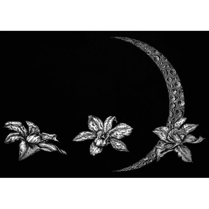 Night Flowers - Przemyslaw Tyszkiewicz