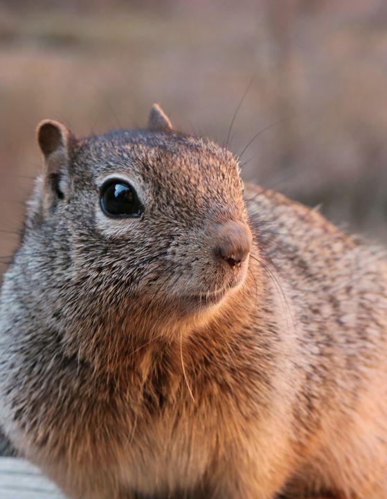 A Little Nutty - Brinlee