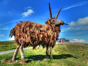 Lloaghtan Sheep on the Mountain