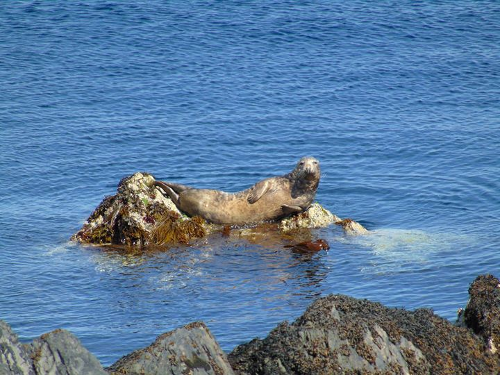 Sun Sea and Seal - Manx Haven