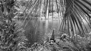 Serenity (Black & White)