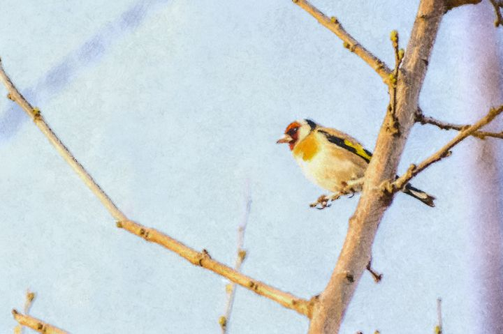 European goldfinch - Vidordesign