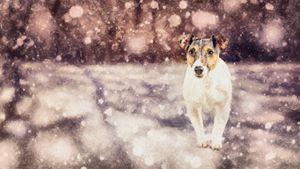 Lone Snow - Vidordesign