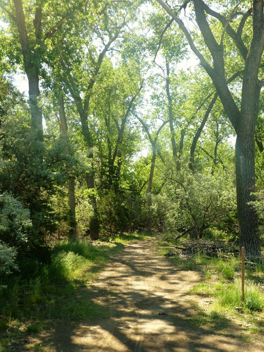 Woodland trail - Inspired Art and Crafts