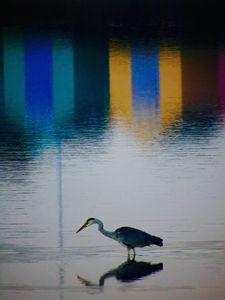 Wading Through Colour