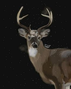 A whitetailed buck