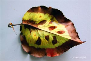 September Leaf - Paintings by John Lautermilch