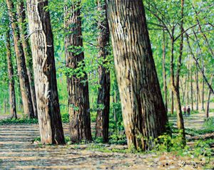 Cottonwoods at Creve Coeur Park - Paintings by John Lautermilch