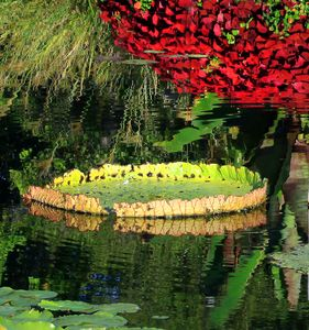 Bright Colors on the Pond - Paintings by John Lautermilch