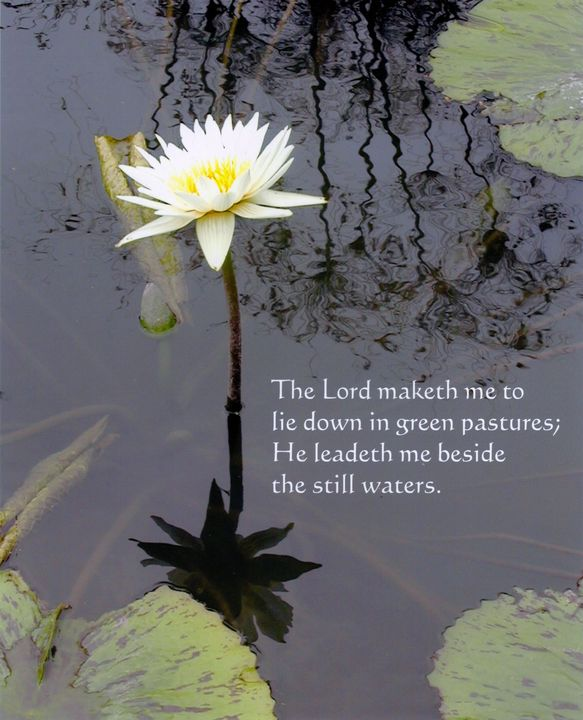 Water Lily with Verse - Paintings by John Lautermilch