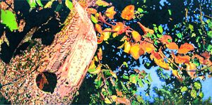Autumn Pear Tree - Paintings by John Lautermilch