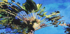 Florida's Palm Tree - Paintings by John Lautermilch