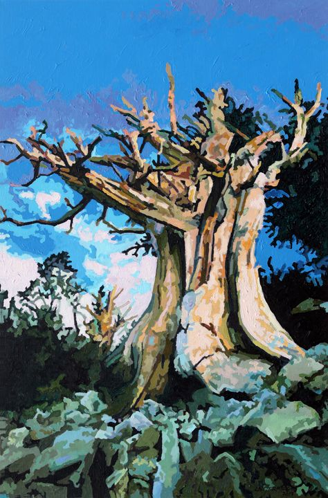 Old Pine Tree - Paintings by John Lautermilch