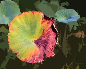 Autumn Lotus Leaf Four - Paintings by John Lautermilch