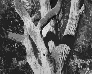 Twisting Tree - Paintings by John Lautermilch