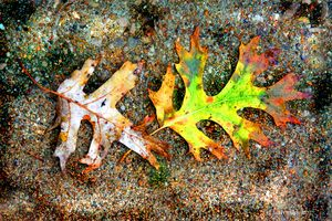 Winter Leaves - Paintings by John Lautermilch