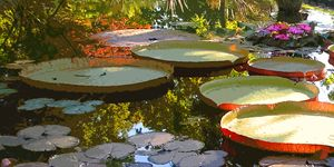 Morning Sunlight through Lilies - Paintings by John Lautermilch