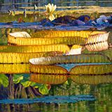 Glorious Morning Lilies - Paintings by John Lautermilch