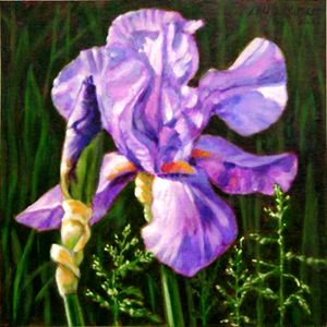 Iris in Sunlight - Paintings by John Lautermilch