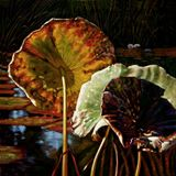 Fall Trinity - Paintings by John Lautermilch